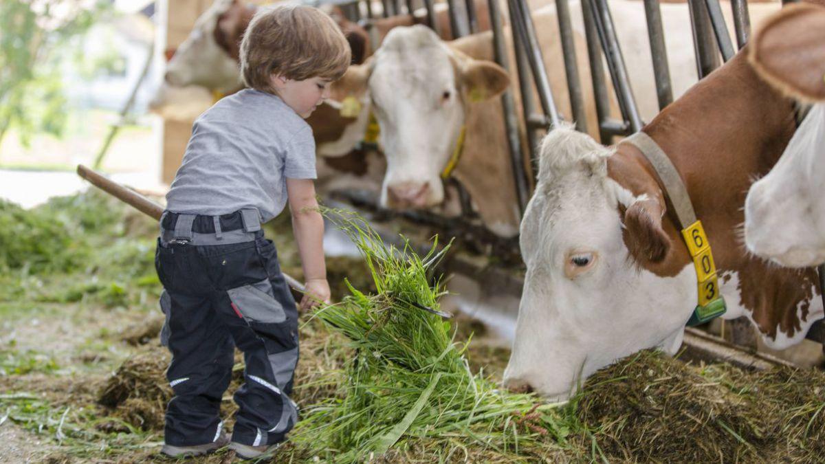 Wohnen und Arbeiten bei bayrischen Bauern. LEBENSART Reisen